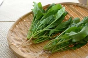 せっかくの栄養、逃がしているかも!ほうれん草と食べ合わせが悪い食材4つを管理栄養士が解説